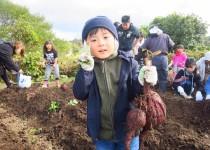 181014サツマイモ収穫体験