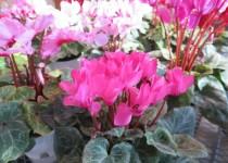 181202花 (1)