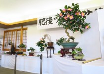 190116肥後ツバキ盆栽展示会