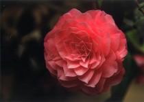 奨励賞(4)59