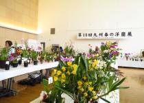 190406九州春の洋蘭展