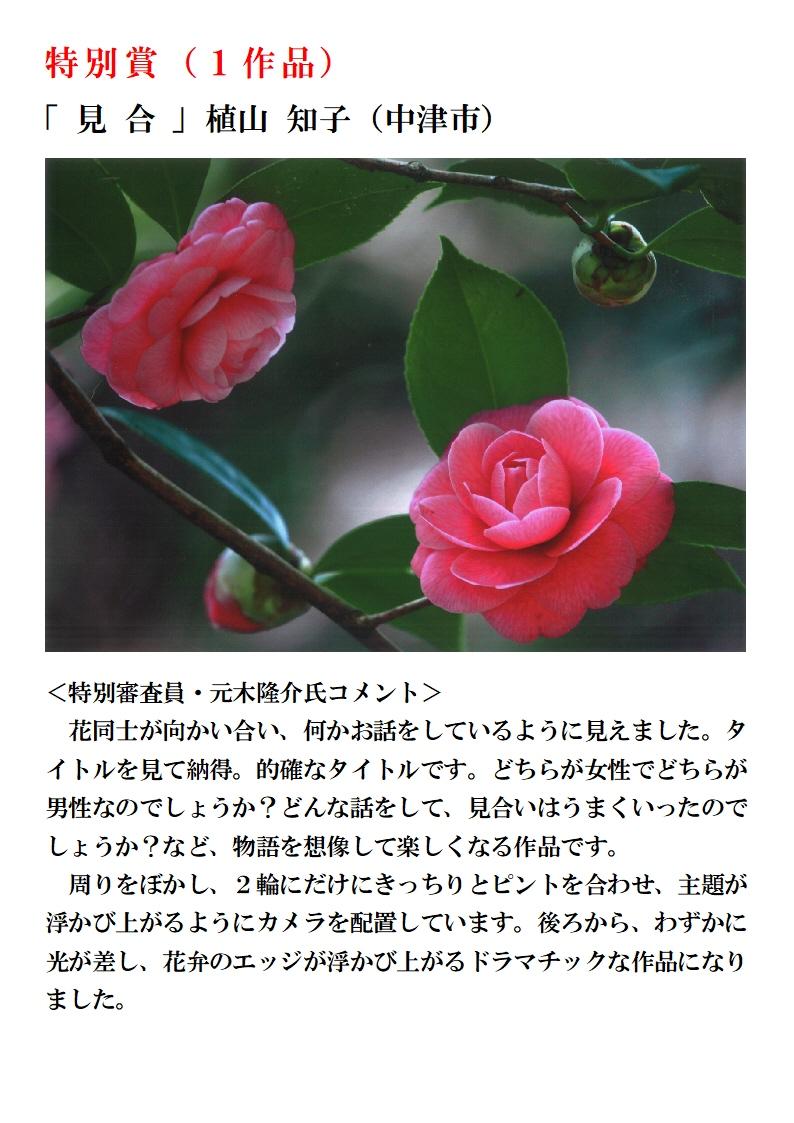 椿まつり写真コンテストHP用受賞作品発表2A4