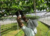 200516果樹の栽培