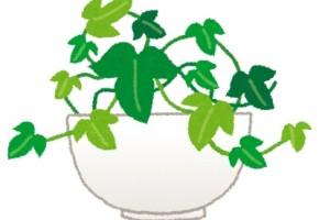 plant_ivy