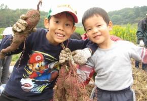 201003サツマイモの収穫体験