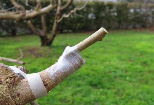 201226接ぎ木 (1)
