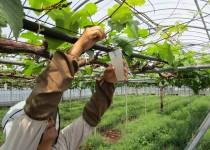 210407果樹の栽培方法